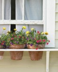 windowbox pots