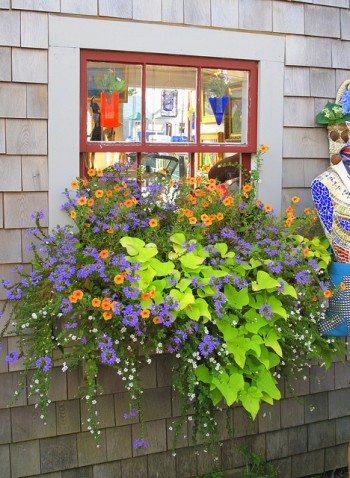 Window Box Ideas Cool Garden Ideas