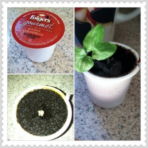 how to start seeds in k-cups