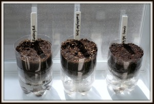 how to start seeds in soda bottles